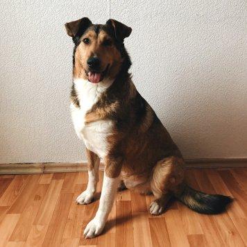 Рэнди - Собаки в добрые руки