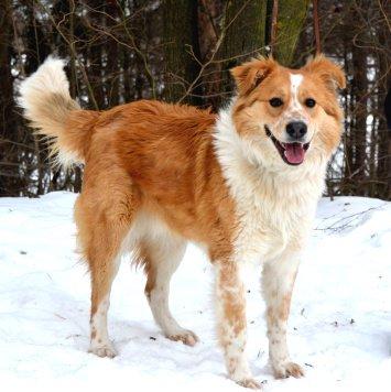 Карат - Собаки в добрые руки
