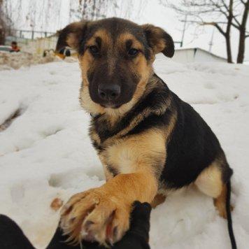 Варя - Собаки в добрые руки