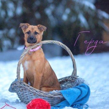 Герда и Скай - Собаки в добрые руки