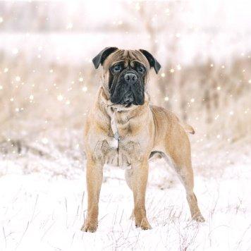 Юджин - Собаки в добрые руки