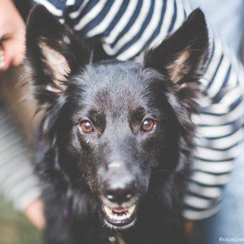 Ананас - Собаки в добрые руки