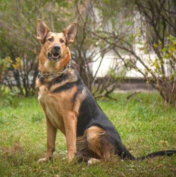 Стеша - Собаки в добрые руки
