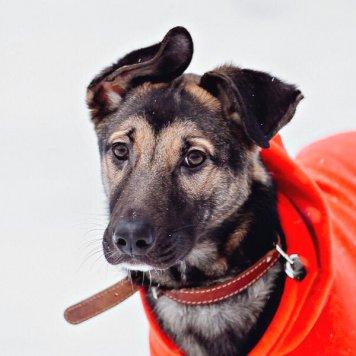 Бронкс - Собаки в добрые руки
