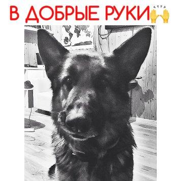 Бой - Собаки в добрые руки