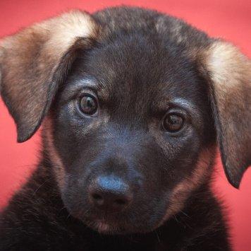 Роджер - Собаки в добрые руки