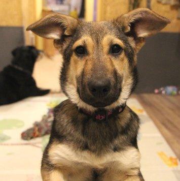 Сьюзи - Собаки в добрые руки