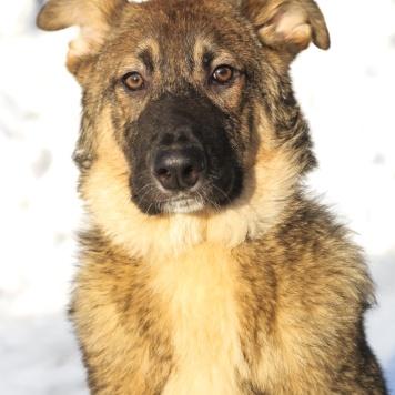 Артем - Собаки в добрые руки