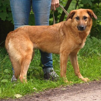 Матрешка - Собаки в добрые руки