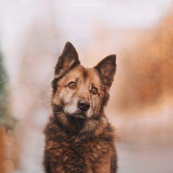 Чокко - Собаки в добрые руки