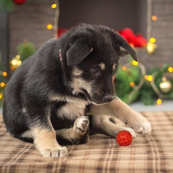 Шарлотта - Собаки в добрые руки