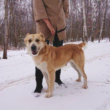 Норд - Найденные собаки