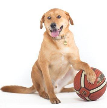 Бун - Собаки в добрые руки