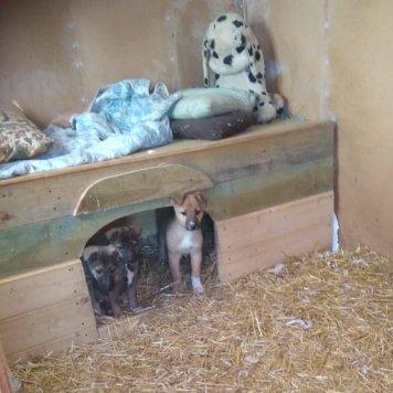 Рыжуля - Найденные собаки