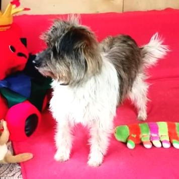Вэлла - Собаки в добрые руки