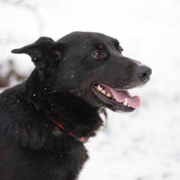Пеппи - Собаки в добрые руки