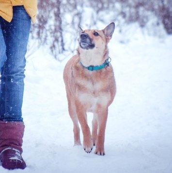 Лейсан - Собаки в добрые руки