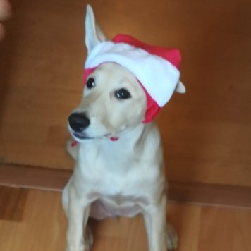 Анжелика - Собаки в добрые руки