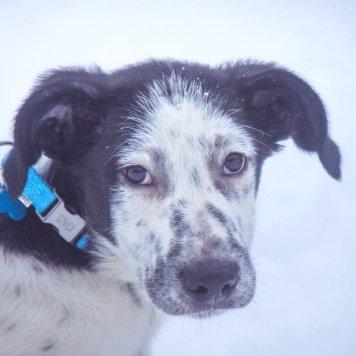 Снежок - Собаки в добрые руки