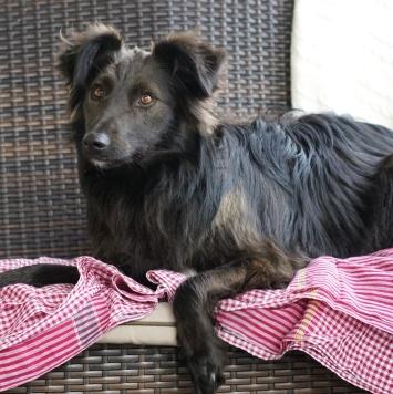 Боча - Собаки в добрые руки