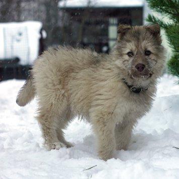 Шурик - Собаки в добрые руки