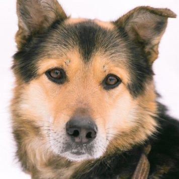 Макс - Собаки в добрые руки