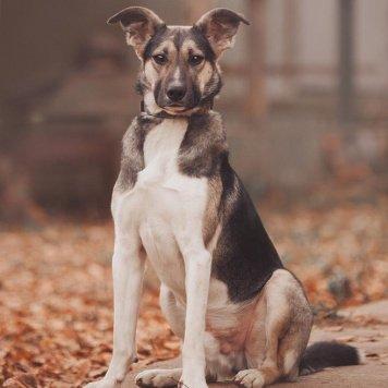 Клермон - Собаки в добрые руки