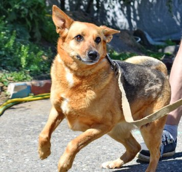 Лаймочка - Собаки в добрые руки