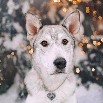 Сага - Собаки в добрые руки