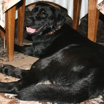Гранд - Собаки в добрые руки
