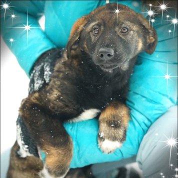 Гретта - Собаки в добрые руки