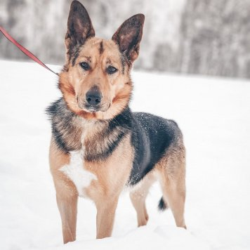 Пирс - Собаки в добрые руки