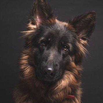 Франческа - Собаки в добрые руки