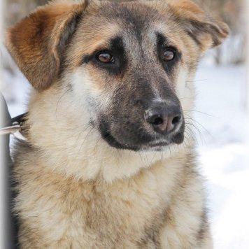 Ариана - Собаки в добрые руки