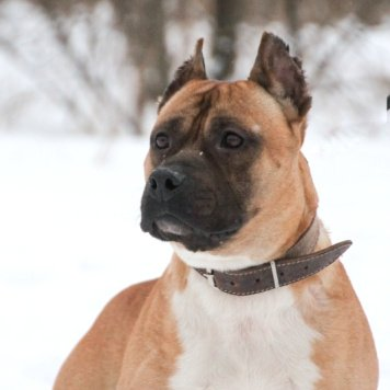 Дамбай - Собаки в добрые руки