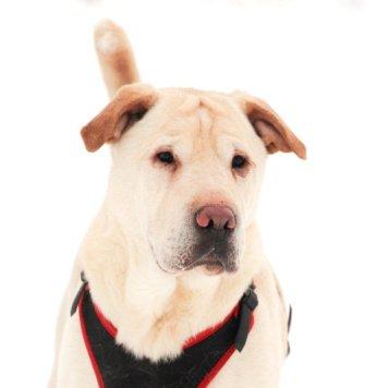 Зордан - Собаки в добрые руки