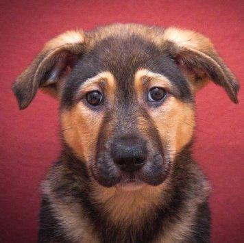 Спайк - Собаки в добрые руки
