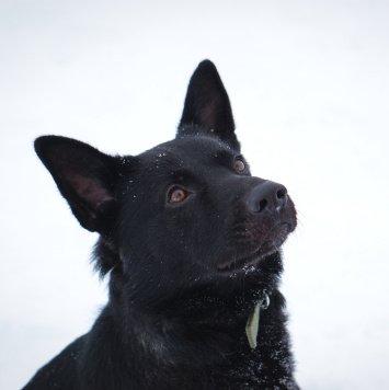 Рони - Найденные собаки