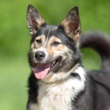 Мотя - Собаки в добрые руки