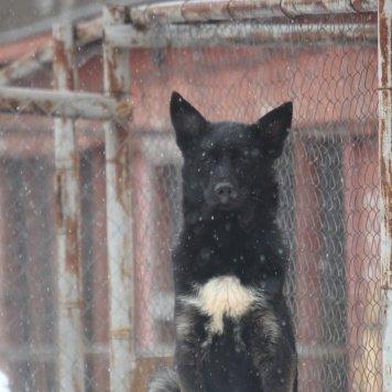 Ваксик - Собаки в добрые руки