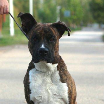 Джастар - Собаки в добрые руки