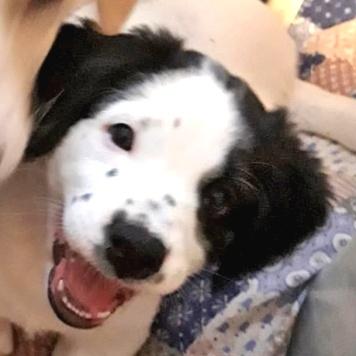 Марьяша - Собаки в добрые руки