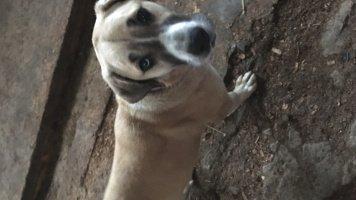 Альма - Собаки в добрые руки