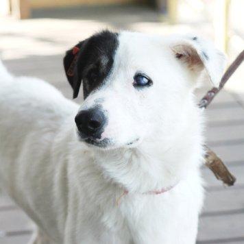 Пуэр - Собаки в добрые руки