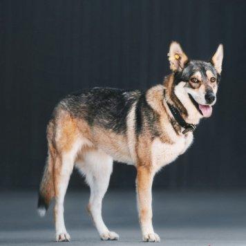 Шлёпа - Собаки в добрые руки