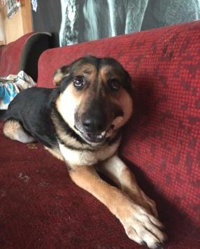 Стенли - Собаки в добрые руки