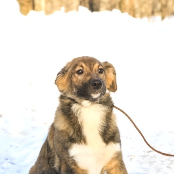 Виталина - Собаки в добрые руки