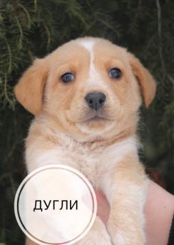 Дугли - Собаки в добрые руки