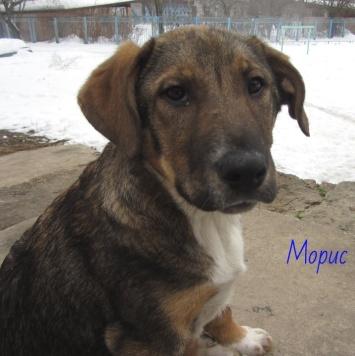 Морис - Собаки в добрые руки