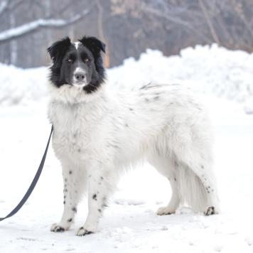 Уэлси - Собаки в добрые руки